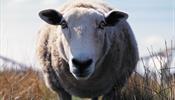 «ВИМ-Авиа» может быть не единственной паршивой овцой