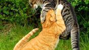Стратегия котов – или еще раз с Новым Годом