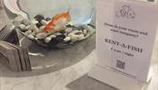 Отель в Бельгии предлагает взять в аренду рыбку